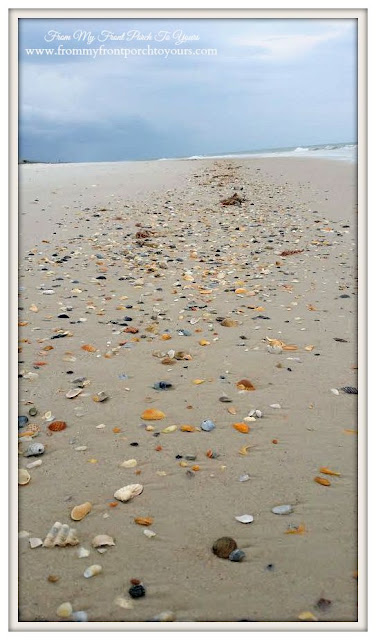 Sea Shells on Beach-St. George Island-The Forgotten Coast- From My Front Porch To Yours
