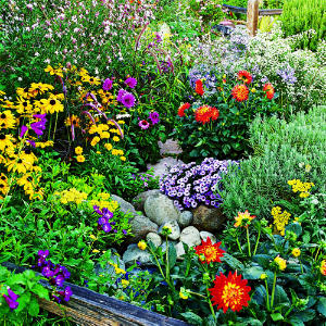mixture of summer flowers in a rock garden in blues, reds, yellows, purples and oranges