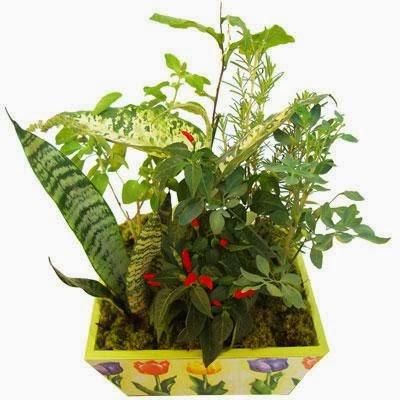 Vaso das sete ervas - Plantas pequenas de interior ...