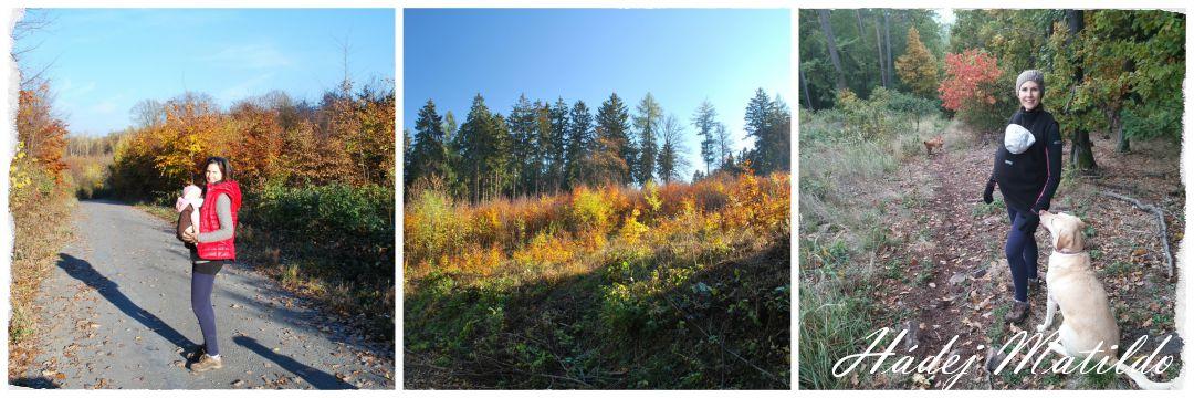 procházka v lese, venčení