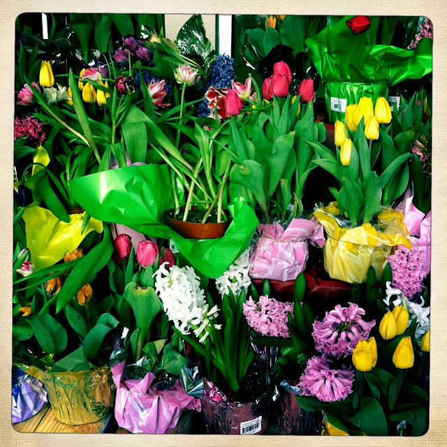 Tulips-and-Hyacinths-at-Stop-and-Shop-in-Farmingdale