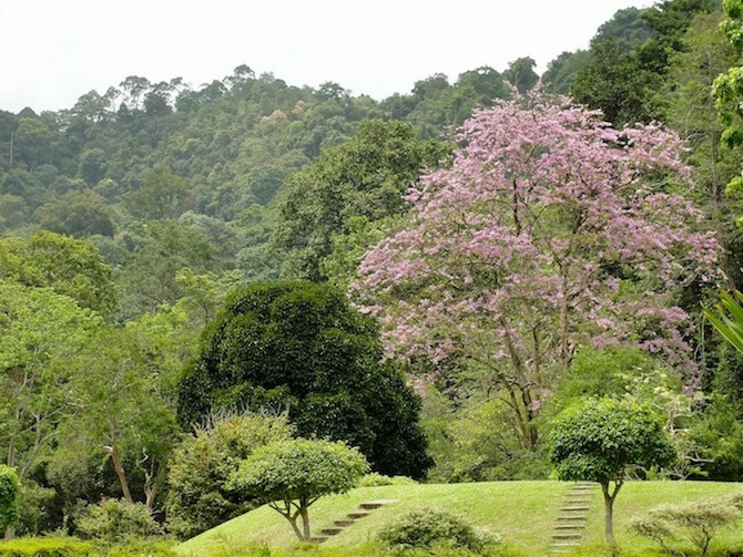 penang botanic gardens