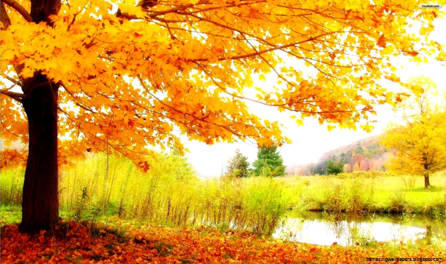 YouWall   Autumn Tree and Lake Wallpaper   wallpaperwallpapers