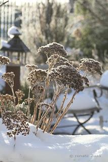 Raureif, Winter im Garten, Sedum, Ganzjahresgarten, Stauden im Winter, Winterschönheiten im Garten