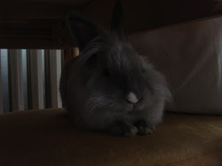 bunny in pain urinary tract infection