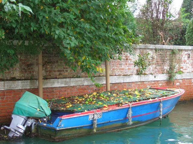Venise c t jardin un oranger des osages i giardini for Giardini a venise