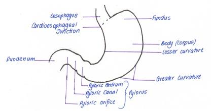 X ray vision a radiography blog radiographer performed barium swallow indications ccuart Choice Image
