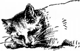drawing of sleeping cat