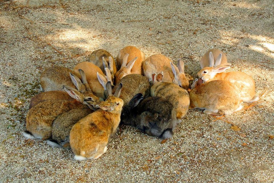 Huddle Of Buns