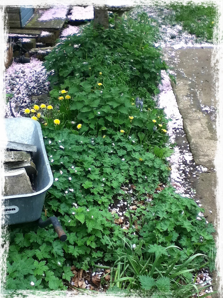 Simple Natural Handmade A Small Herb Garden