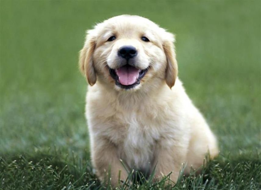 pet As Melhores Raças de Cães para Família