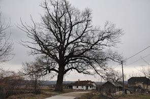 СПИСАК ЗАПИСА У СРБИЈИ