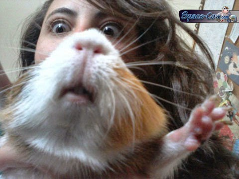 funny hamster face picture