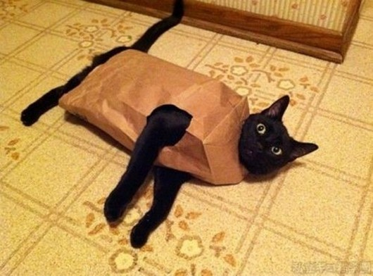 60 pictures of funny cats, funny cat pictures, cute cats