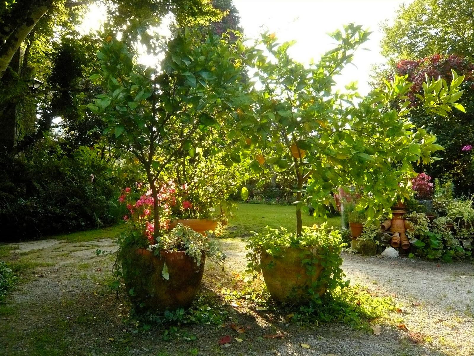 Mi jard n mi para so verde y ocre - Recuperar jardin seco ...