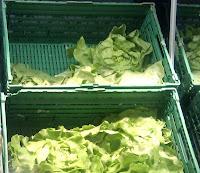 Bild: Mehrere Salatköpfe in Gemüsekisten, in einem Gemüseregal.