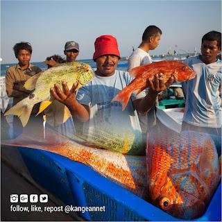 Jumlah Jenis Ikan Yang Ditemui di Perairan Kangean