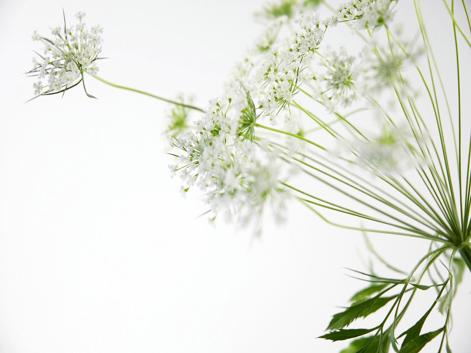 http://3.bp.blogspot.com/-bA3CFwtB4bM/T7CQk_6lg8I/AAAAAAAAAMI/BrthqHHJMX4/s1600/nice_white_flowers_desktop_wallpaper_46787.jpg