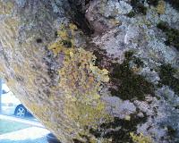 http://24henduro.blogspot.ca/2009/07/lichen-stone.html