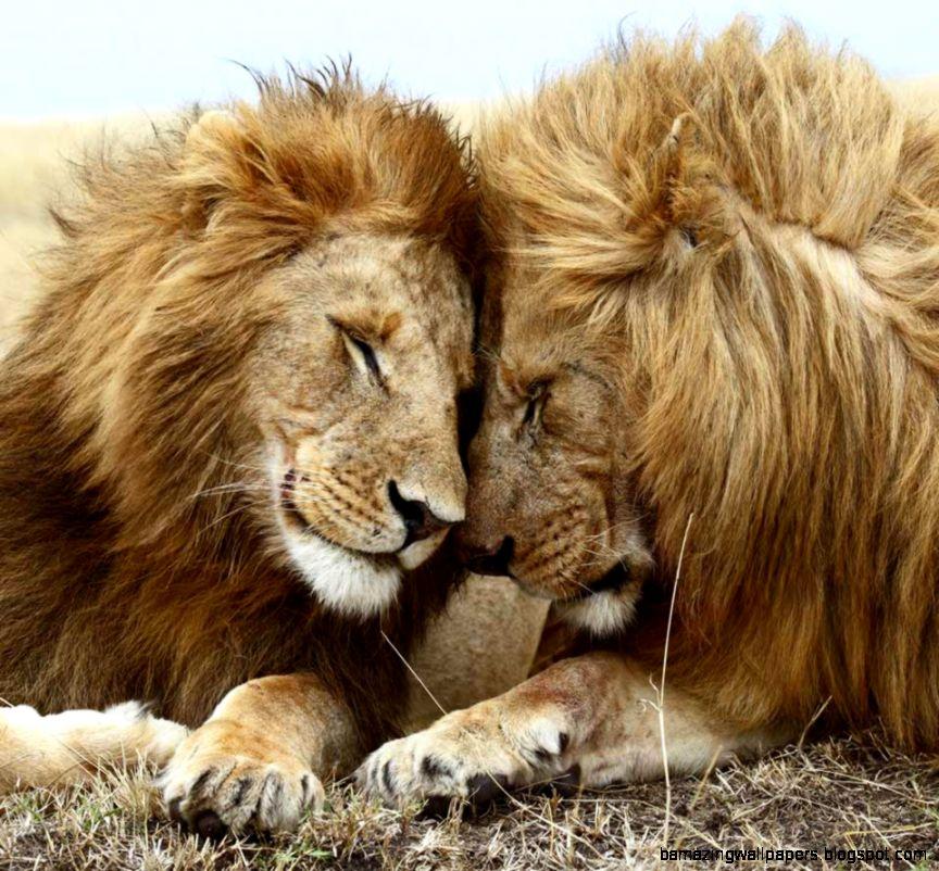 World Animal Day – 04th October  Asha39s Blog