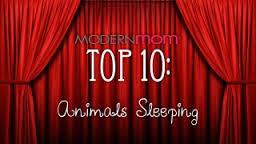 Des animaux trop mignons qui s'endorment