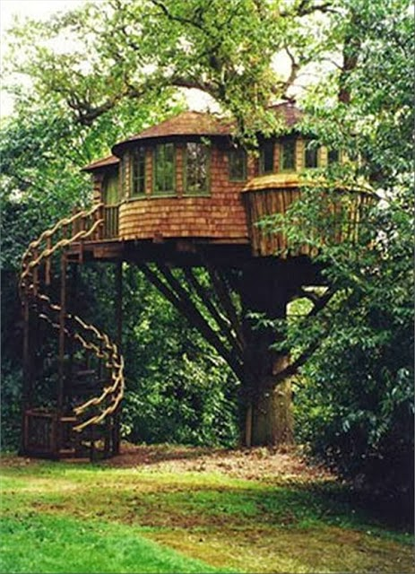mindblowing planet earth world 39 s best tree house