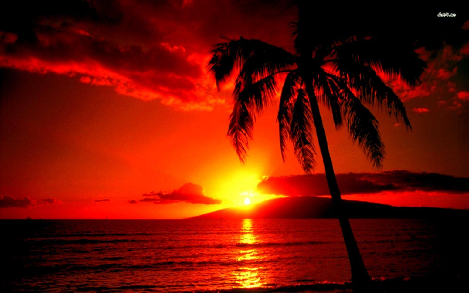 Sunset hawaii beach wallpaper  1680x1050  32147