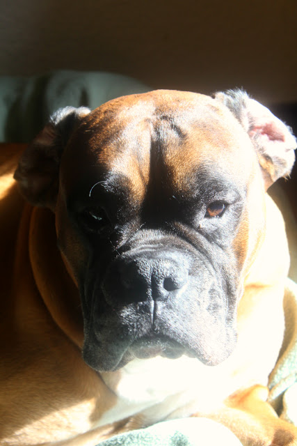 mars the dog in his sunshine