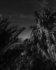 Βαγγέλης Πρασσάς,   έκθεση φωτογραφίας