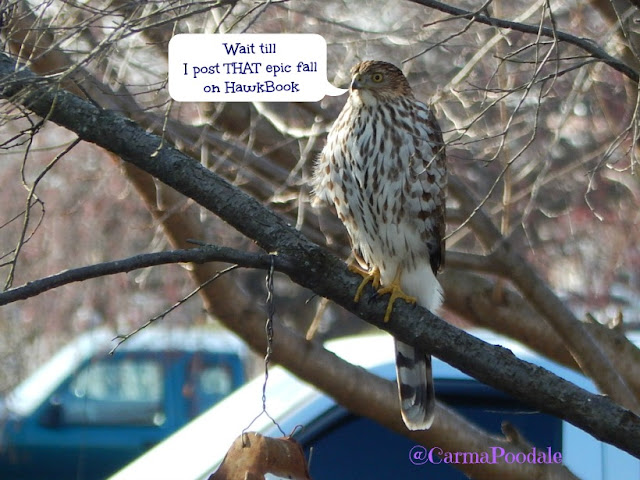 Hawk talking about posting on hawkbook