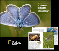 BORBOLETA-AZUL-DAS-TURFEIRAS :: ARTIGO NATIONAL GEOGRAPHIC - PORTUGAL