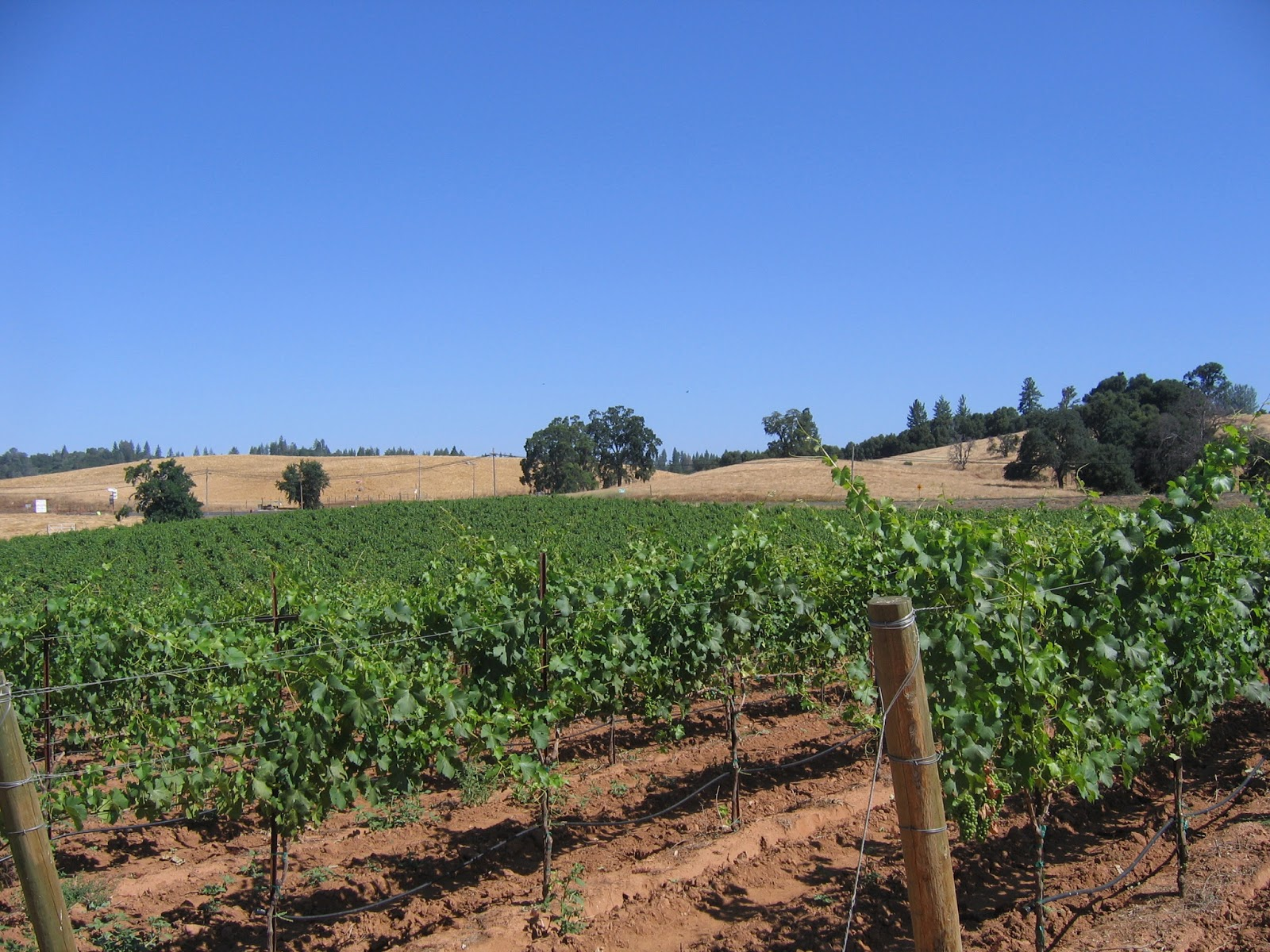 Karm 232 Re Vineyards And Winery Plymouth California Erik