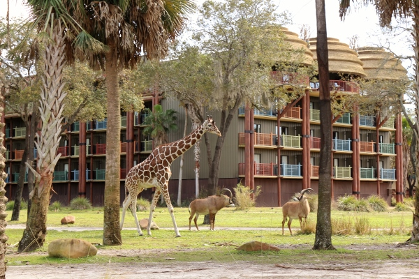 Image result for Watch the Animals at Disney's Animal Kingdom Lodge