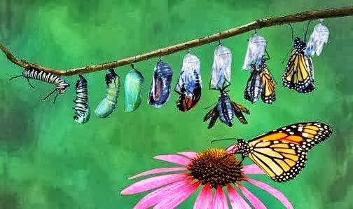 Metamorfosis Kupu-kupu Yang Indah   Jossanderline