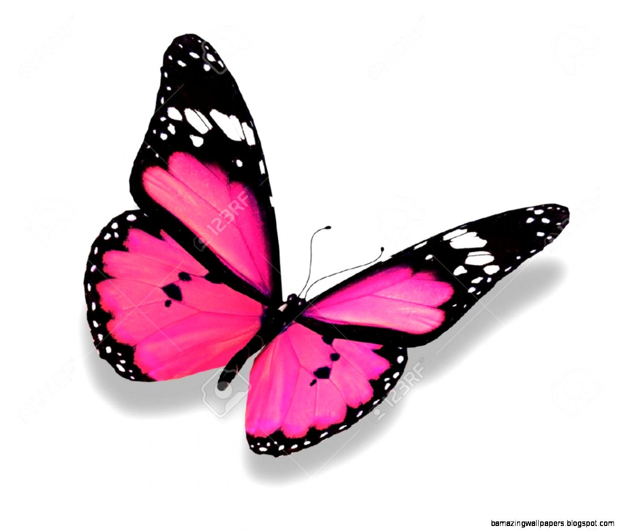 Pink Butterfly Stock Photos Images Royalty Free Pink Butterfly