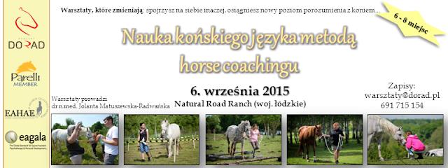 nauka końskiego języka metodą horse coachingu