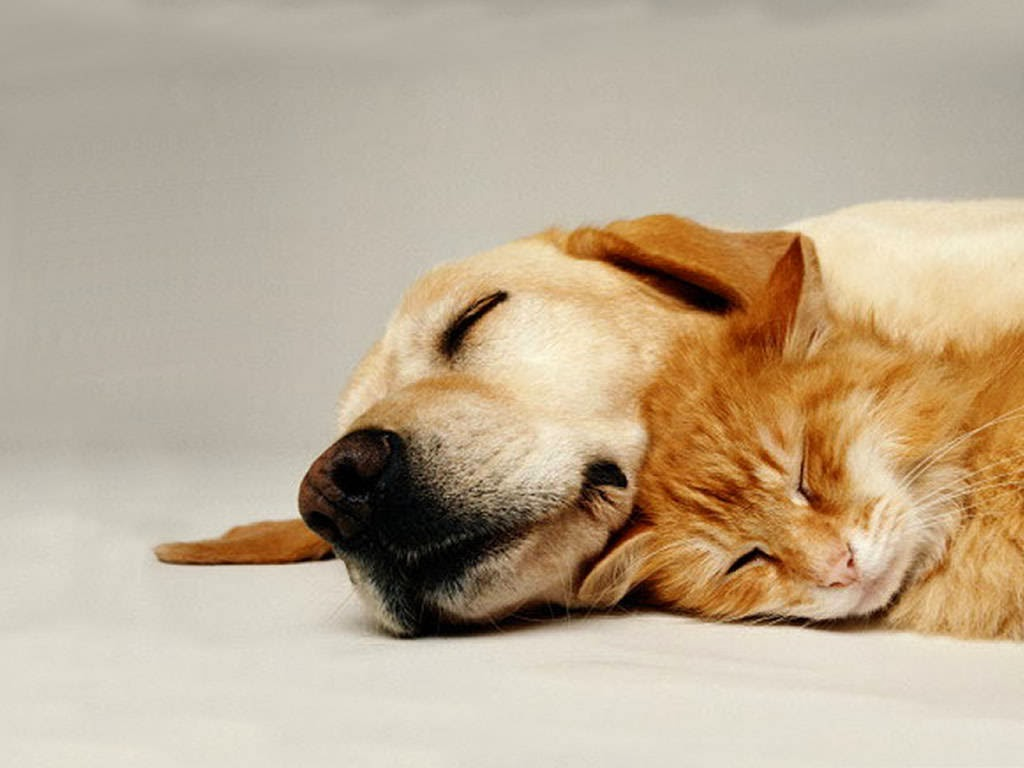 Cute-Dog-with-Cute-Cat-Wallpaper.jpg