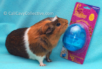 eggcersizer guinea pig treat dispenser review