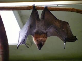 Bats Power Flight