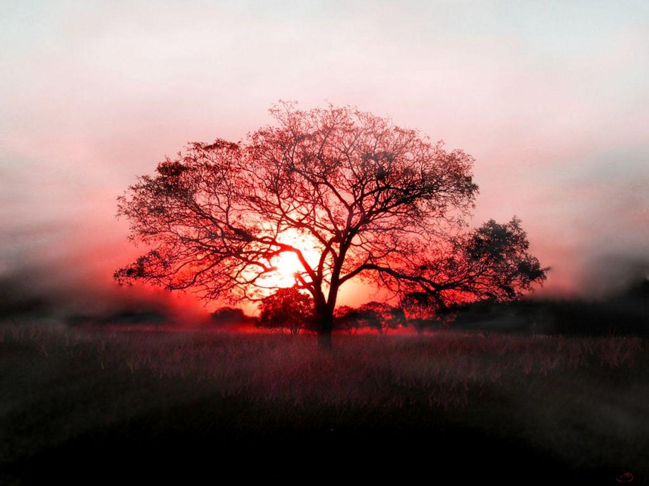 http://3.bp.blogspot.com/-bBbf2IerY5s/T7SzVPYJvbI/AAAAAAAANn4/eiFf-ldS2w8/s1600/Tree+wallpaper+gallery++(11).jpg