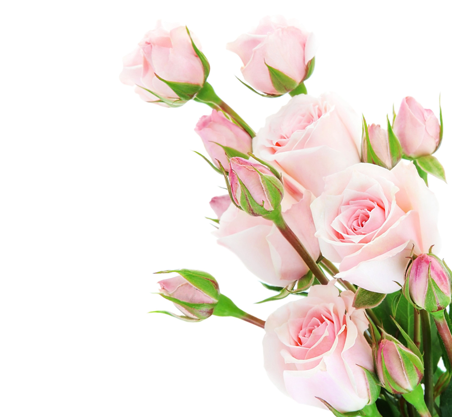The gallery for pink roses corner border - Ramos de rosas rosas ...