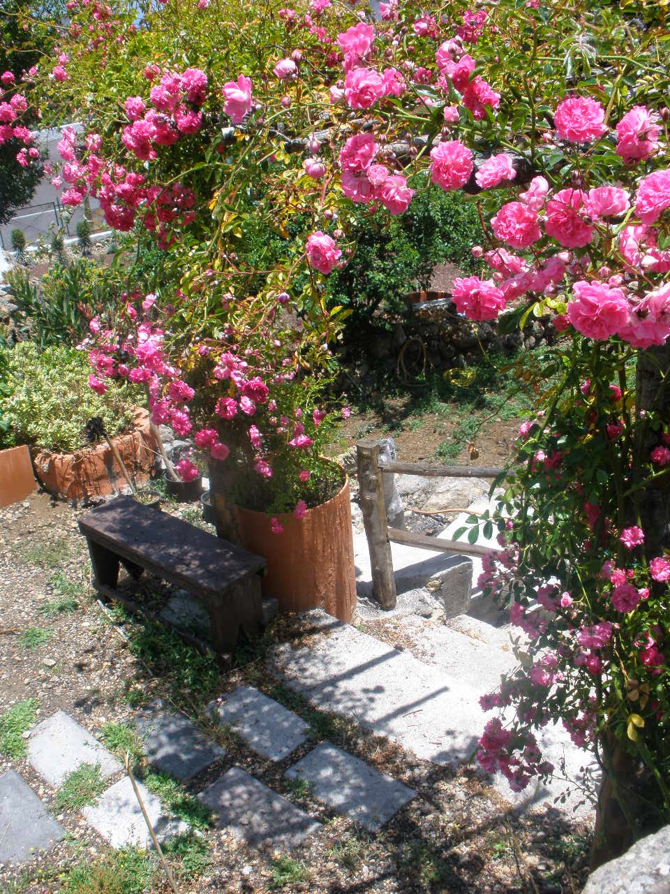 Los secretos de un rosal maravillosas frases del mundo for Cancion secretos en el jardin