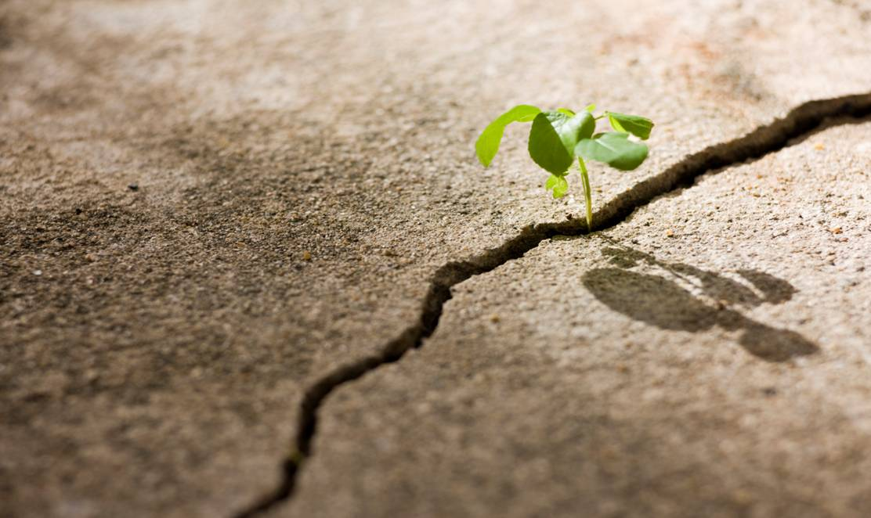http://3.bp.blogspot.com/-bBwJ7_z2--o/ThXtFd_7wWI/AAAAAAAAB5s/EXCm7h1wTIQ/s1600/plant-growing-through-crack-in-concrete.jpg