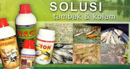 Budidaya Ikan Indonesia