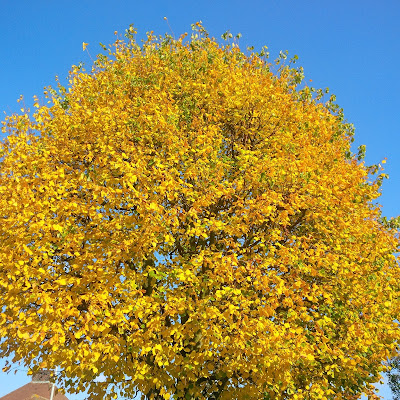 Golden Brown Leaves on a tree in Autumn | Petite Silver Vixen