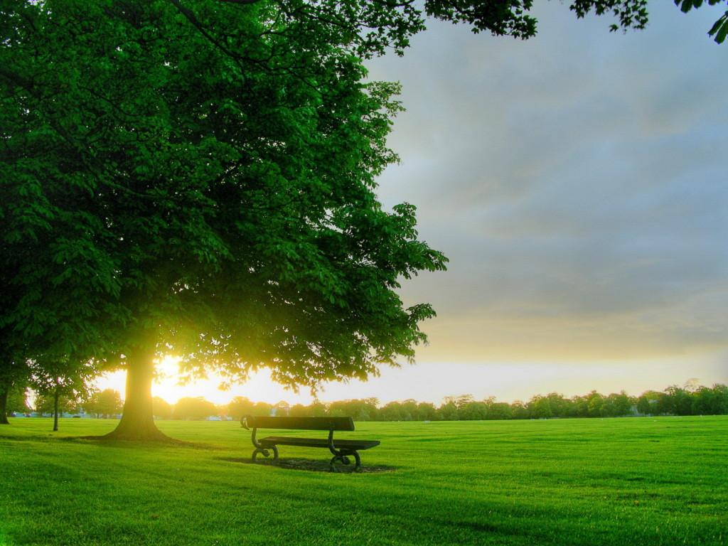 Indahnya lapangan hijau itu