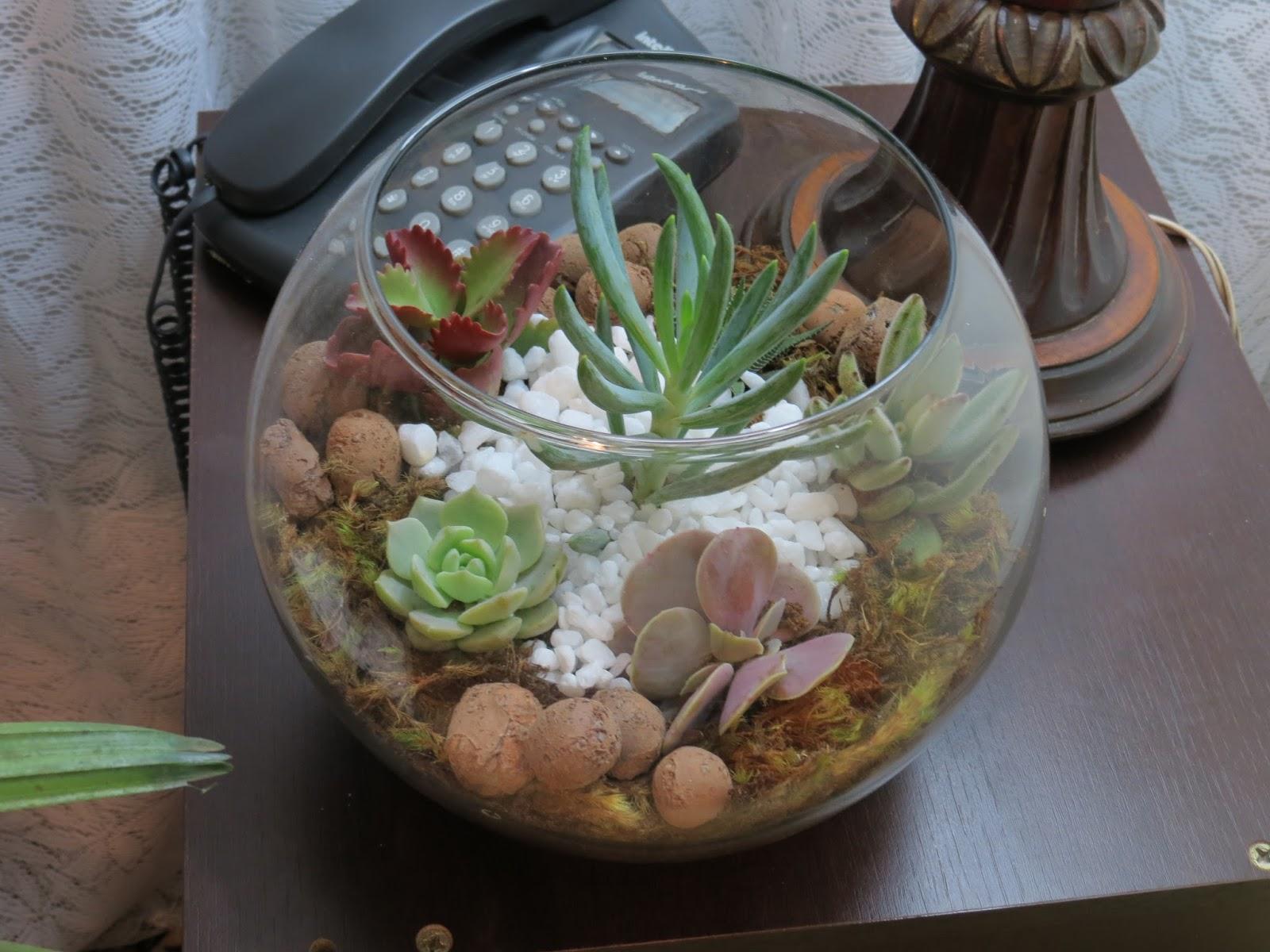mini jardim de vidro: Plantas: Vaso Vidro Terrário Com Suculentas – Mini Jardim Aquário