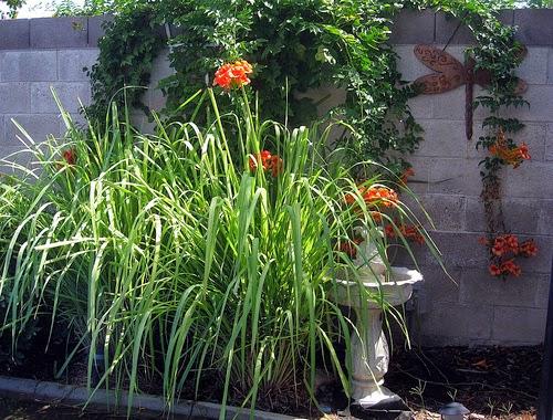 cultivo rosas jardim:Flores e Jardins, plantas, jardinagem e paisagismo: Cultivo e usa