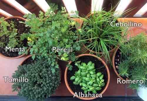 Remedios ancestrales ecuatorianos remedios ancestrales for Cultivo de plantas aromaticas y especias