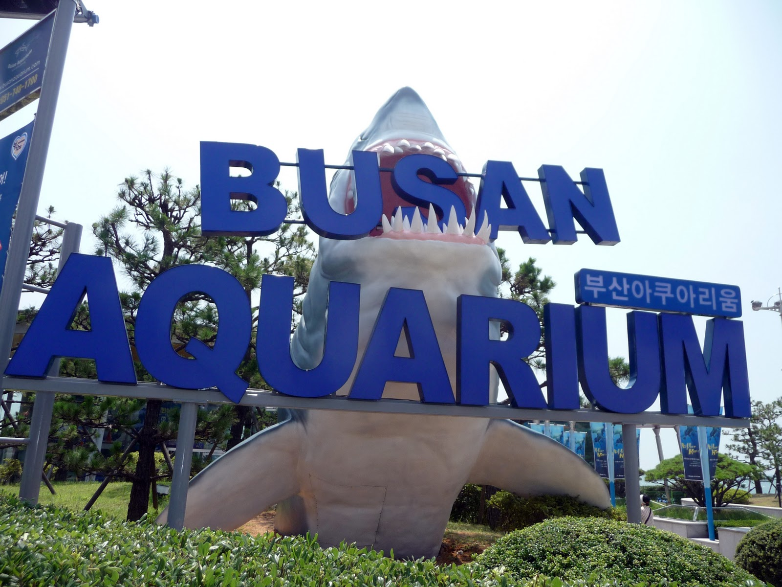 Busan Aquarium Most Popular Attractions South Korea Tourism